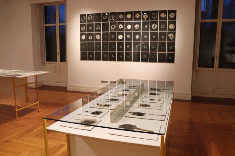 Visita guiada a la exposición 'Nature Change'