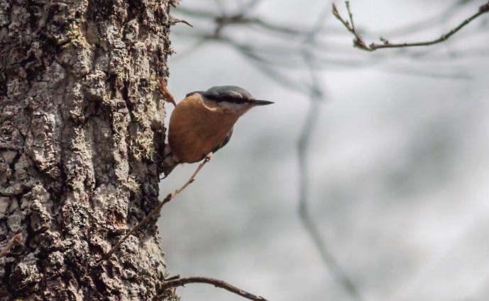 Presentaciones, conociendo las aves de jardín