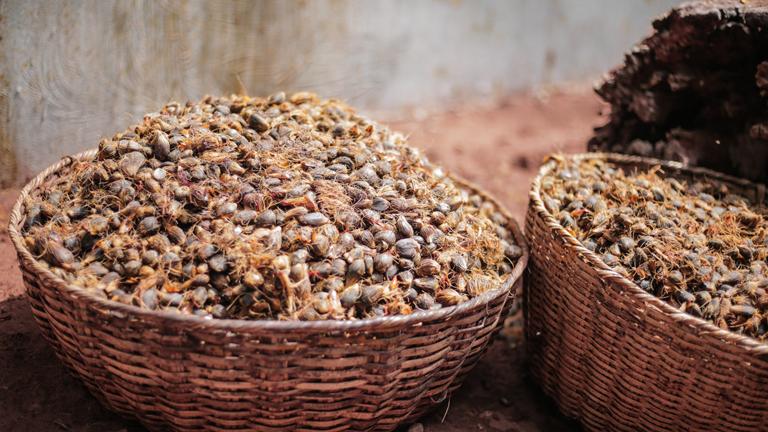 Experiencias de producción artesana de semilla ecológica
