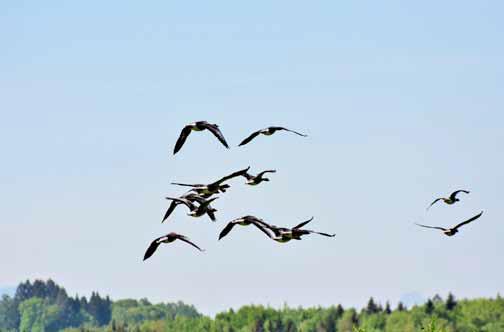 Los viajes de las aves