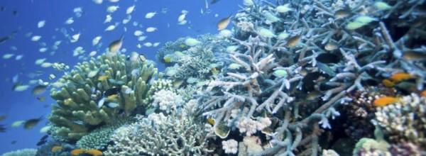 La Gran Barrera australiana sufre una reducción de especies sin precedentes Cristina Enea Fundazioa