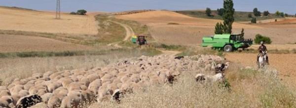 La dispersión de semillas por el ganado y polinizadores mejora la diversidad genética de las plantas Cristina Enea Fundazioa